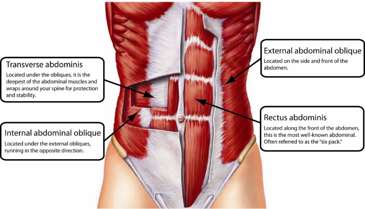 core-muscles-labled-front