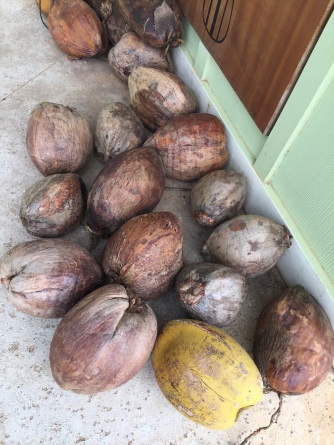 kokosnøtt